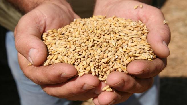 Una persona sostiene un puñado de semillas.