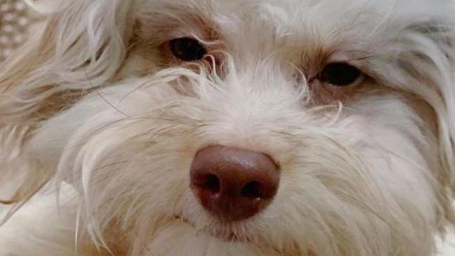 Nori, el perro con rostro humano