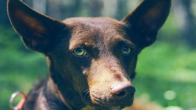 Foto recurso perro, mascota, veterinario