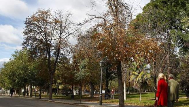 Castaños de indias secos y enfermos en el paseo del Ángel Caído del parque de El Retiro. Allí, los castaños se están sustituyendo por almeces.