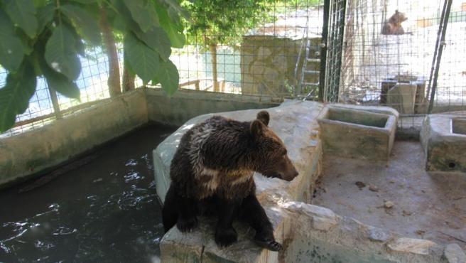 Granada.- Los cinco osos de Peña Escrita serán acogidos en un Santuario de Osos de Hungría