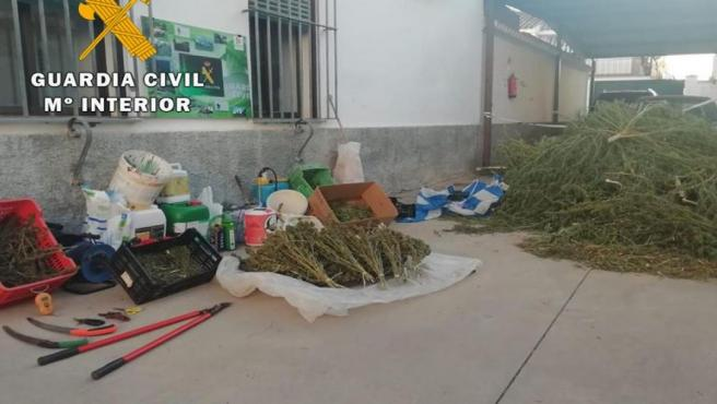 Marihuana intervenida en Palma del Río.