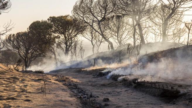 Cuesta Maneli, una de las zonas calcinada tras el incendio junto a Doñana.