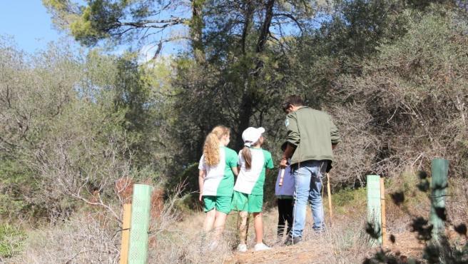 Un total de 80 alumnos han participado en el programa de reforestación del bosque de Bellver en Palma de Mallorca.