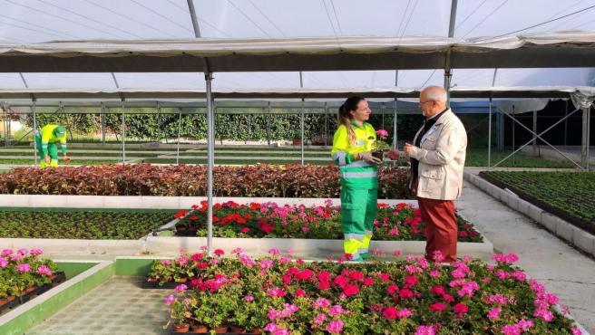 Plantas del vivero municipal de Estepona que surten a la localidad para la mejora y ampliación de sus jardines