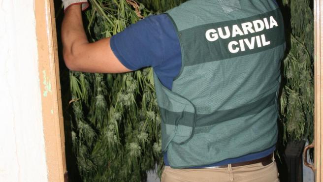 Operación de la Guardia Civil en Cuenca con plantaciones de marihuana.
