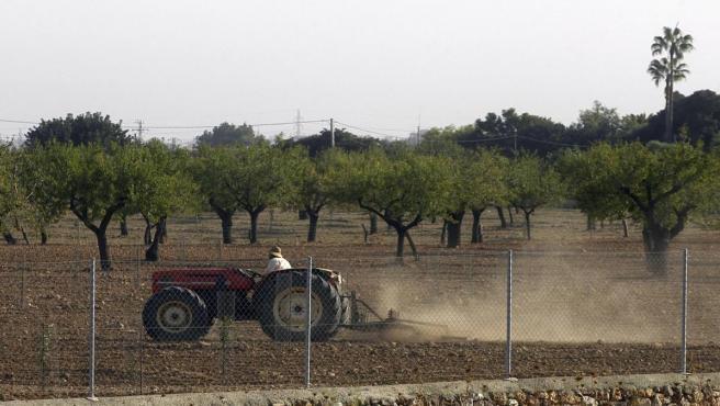 Campo de cultivo en Mallorca