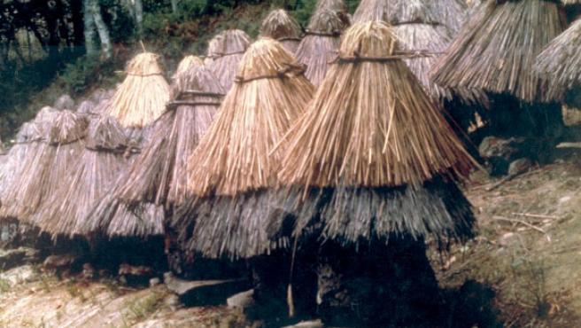 Apicultura tradicional