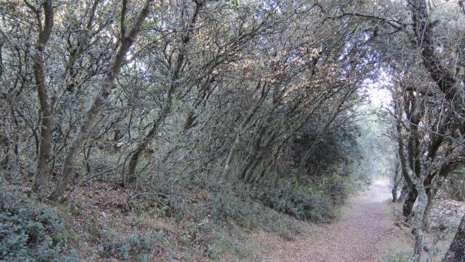 Un sendero por un bosque.