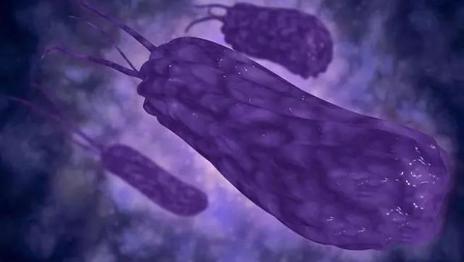 sintomas cuando hay bacterias en el estomago