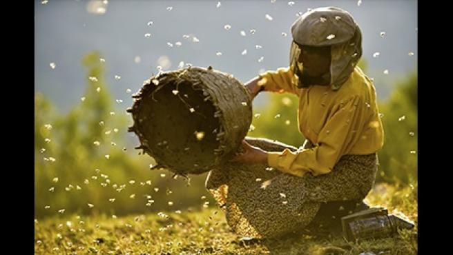 Fotograma de la película macedonia 'Honeyland'