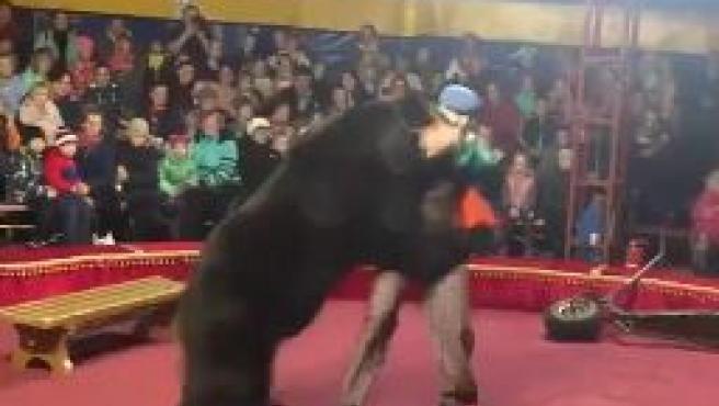 Momento en que el oso ataca a su domador durante uno de los espectáculos del circo.