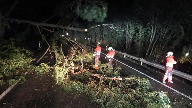 El viento tira un árbol sobre la carretera en Valdáliga