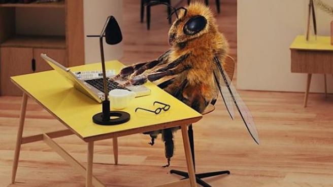 B, la primera abeja influencer.