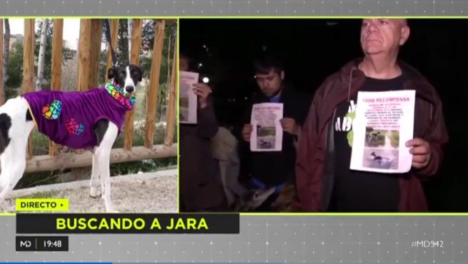 Jara, perra desaparecida en Valdemoro el pasado 27 de septiembre.