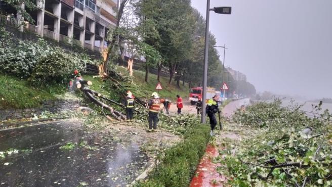 Retirada de árboles caídos por el temporal en Irun