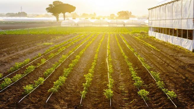 Cultivo en Extremadura