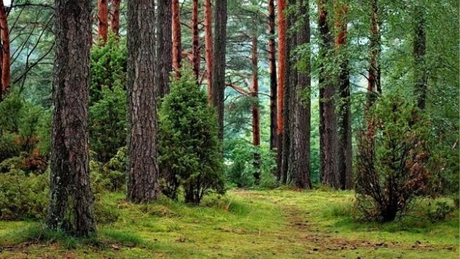 Imagen de archivo de un bosque