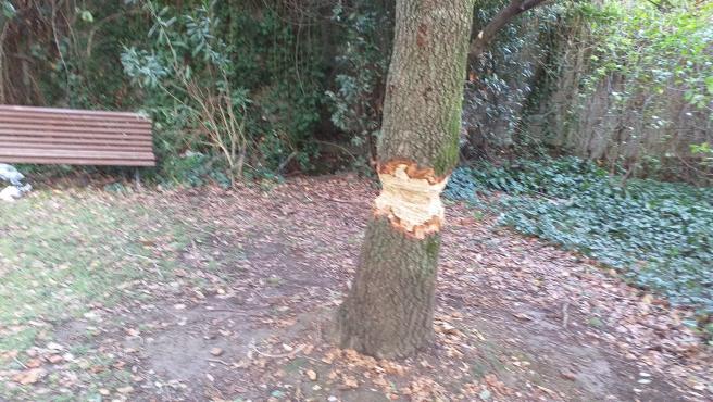 Acto vandálico en un parque de Barakaldo