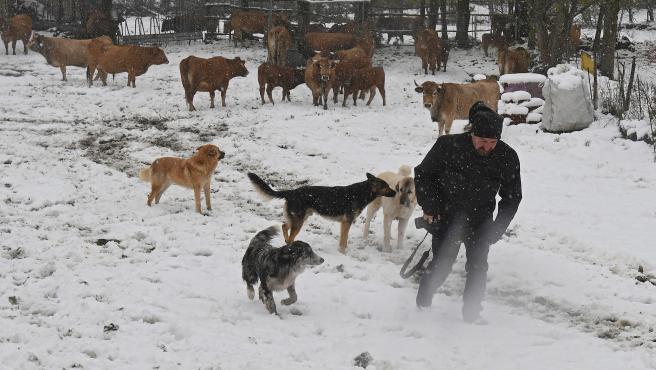 Un hombre pasea junto a sus perros y ganado en Pontedo (León).