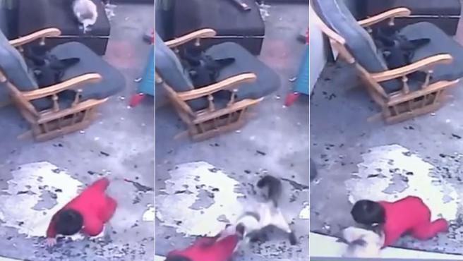 Una usuaria de Facebook ha compartido el vídeo de su gata salvando a su hijo de un años de caerse por unas peligrosas escaleras.