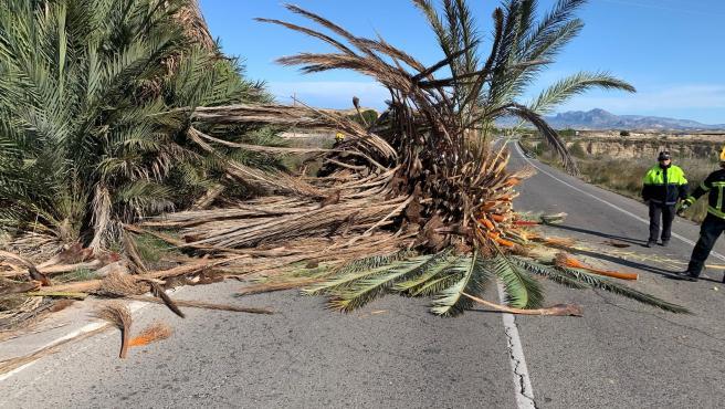 Bomberos actúan en un servicio por una palmera caída por el viento