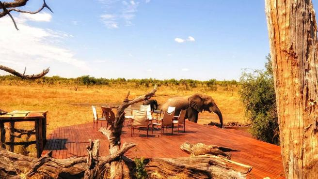 Elefantes en Hwange Park.