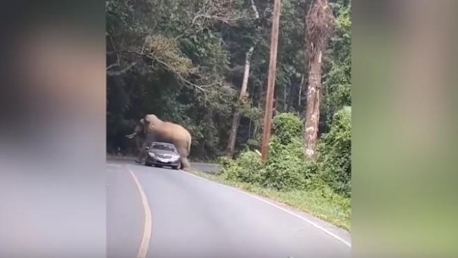 Un elefante toro en Tailandia.
