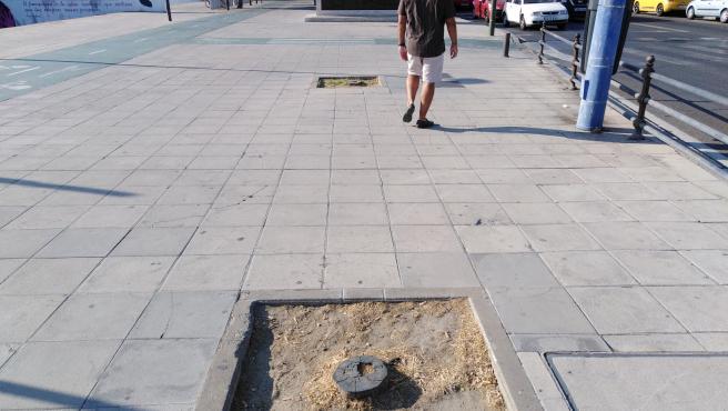 Alcorques vacíos en el entorno del puente del Cachorro, en Sevilla.