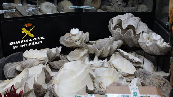 La Guardia Civil interviene unas 1.300 piezas fósiles, especies protegidas y otros elementos en un establecimiento comercial de Vigo.