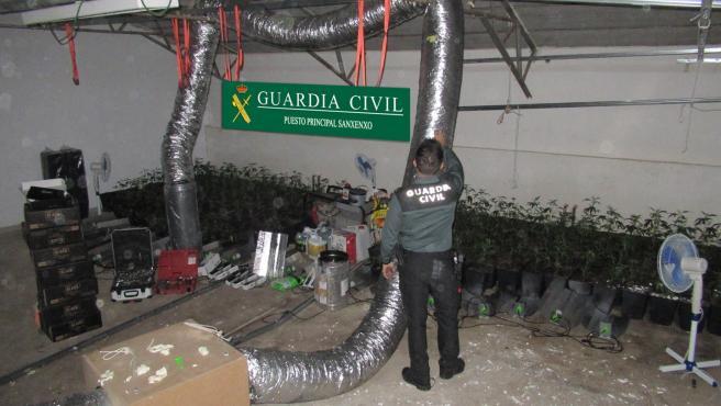 Plantación de marihuana interceptada en una nave alquilada en Poio (Pontevedra).