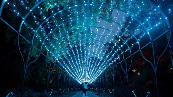 Luces de Navidad del Botánico de Madrid