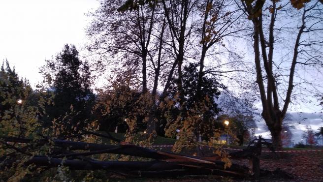 Árbol Derribado Por El Viento En El Parque De Doña Casilda, En Bilbao