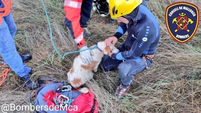 El Grupo de Rescate de Montaña de Inca de los Bombers de Mallorca ha rescatado al perro que había quedado atrapado en el vehículo accidentado