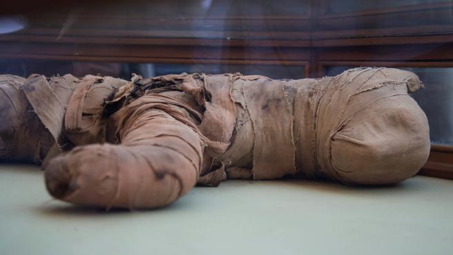Imagen de momia de cachorro de león hallada en Saqqara.
