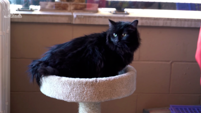Sasha, la gata que ha aparecido cinco años después en otro estado.