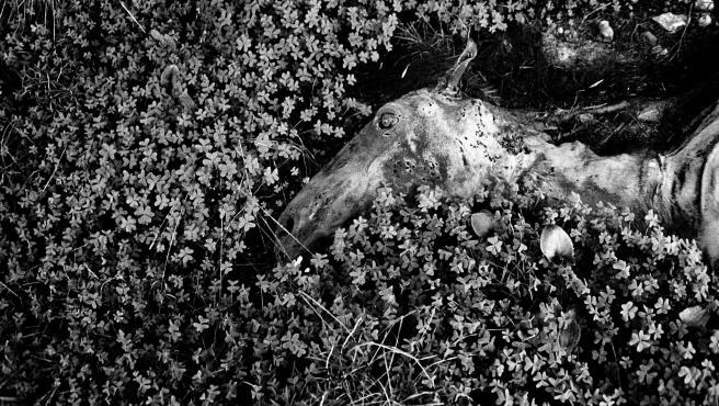 Una de las imágenes que conforman el proyecto 'Badlands-Malas Tierras', del fotógrafo mallorquín Tomeu Coll