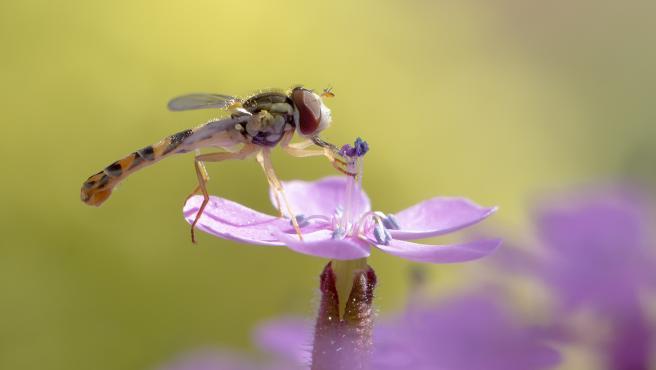 Nota Uclm. Un Estudio Ha Detectado En El Jardín Botánico Una Docena De Especies Nuevas De Insectos Polinizadores Para La Provincia De Albacete
