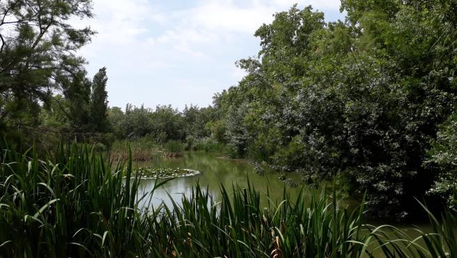 Bosque y lago en el Parque de la Rambleta, ubicado en el barrio de San Marcelino.