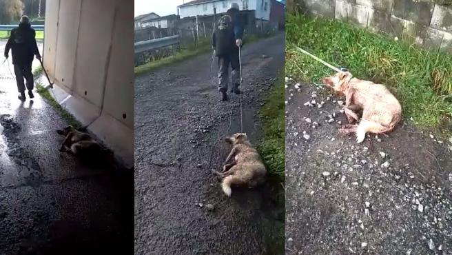 Secuencia de imágenes que muestran cómo el cazador arrastra con una cuerda a su perra después de dispararle y golpearle.