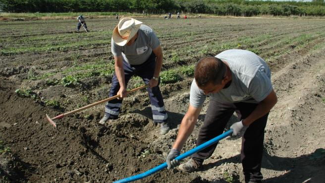 Agricultores labrando la tierra en la Vega de Granada