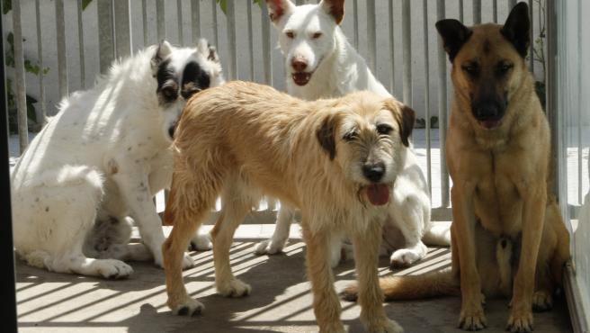 Abandono, perros, gatos. Adopción animal