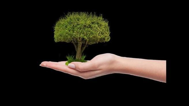 Etxebarri se compromete a plantar un árbol antes del 5 de junio, dentro de la campaña #UnÁrbolPorEuropa