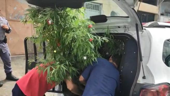 detienen-a-un-hombre-por-tener-un-árbol-de-navidad-de-cannabis-y-dice-que-lo-puso-para-alegrar-a-su-familia