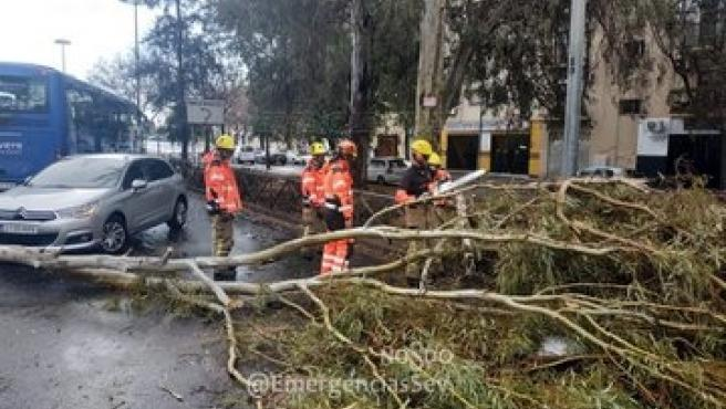 Caída de un árbol por el viento en Sevilla