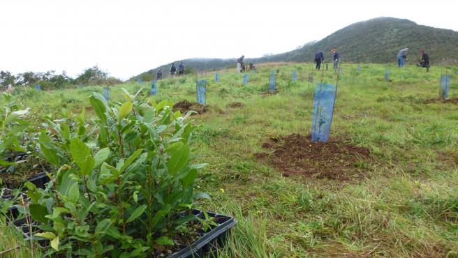 Asprocan y Foresta plantarán más de 4.000 árboles y pinos para recuperar la masa forestal de Gran Canaria