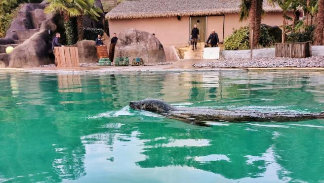 Imagen del zoo de Pont-Scorff, en la Bretaña francesa, adquirido por la ONG REWILD.