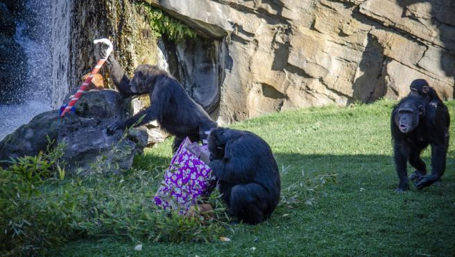 Papá Noel entrega sus regalos en el Bioparc
