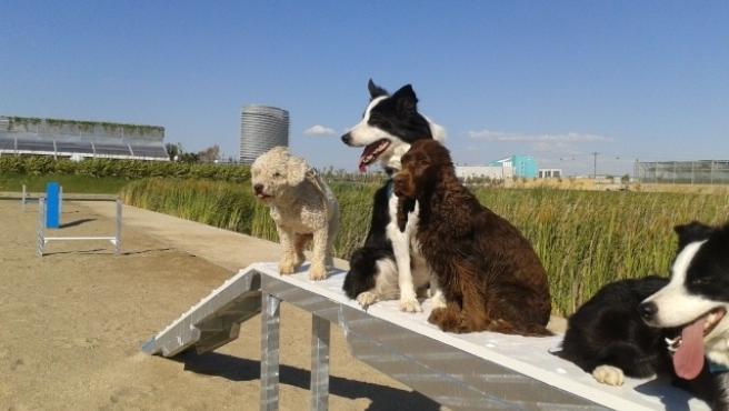 Zona para perros en el Parque del Agua de Zaragoza