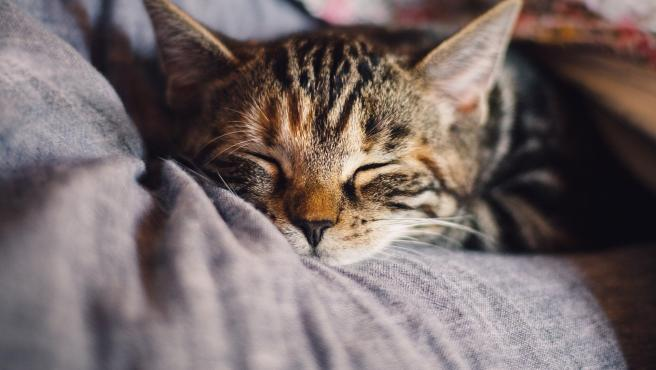 Imagen de archivo de un gato durmiendo.